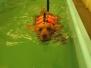 2015-03-26 Hundesvømning