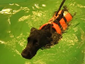 Hundesvømning, Spaniel klubben Region 2